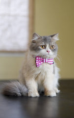 Cat Collar and Bow Tie :  Pink Mix and Match