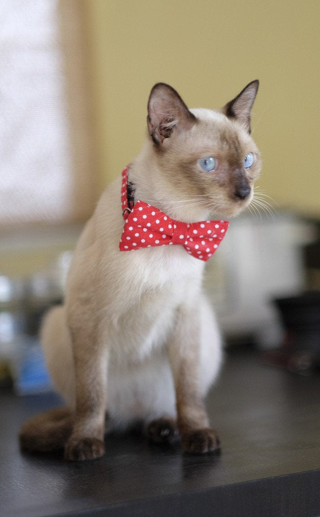Cat Collar and Bow Tie : Red Polka Dot
