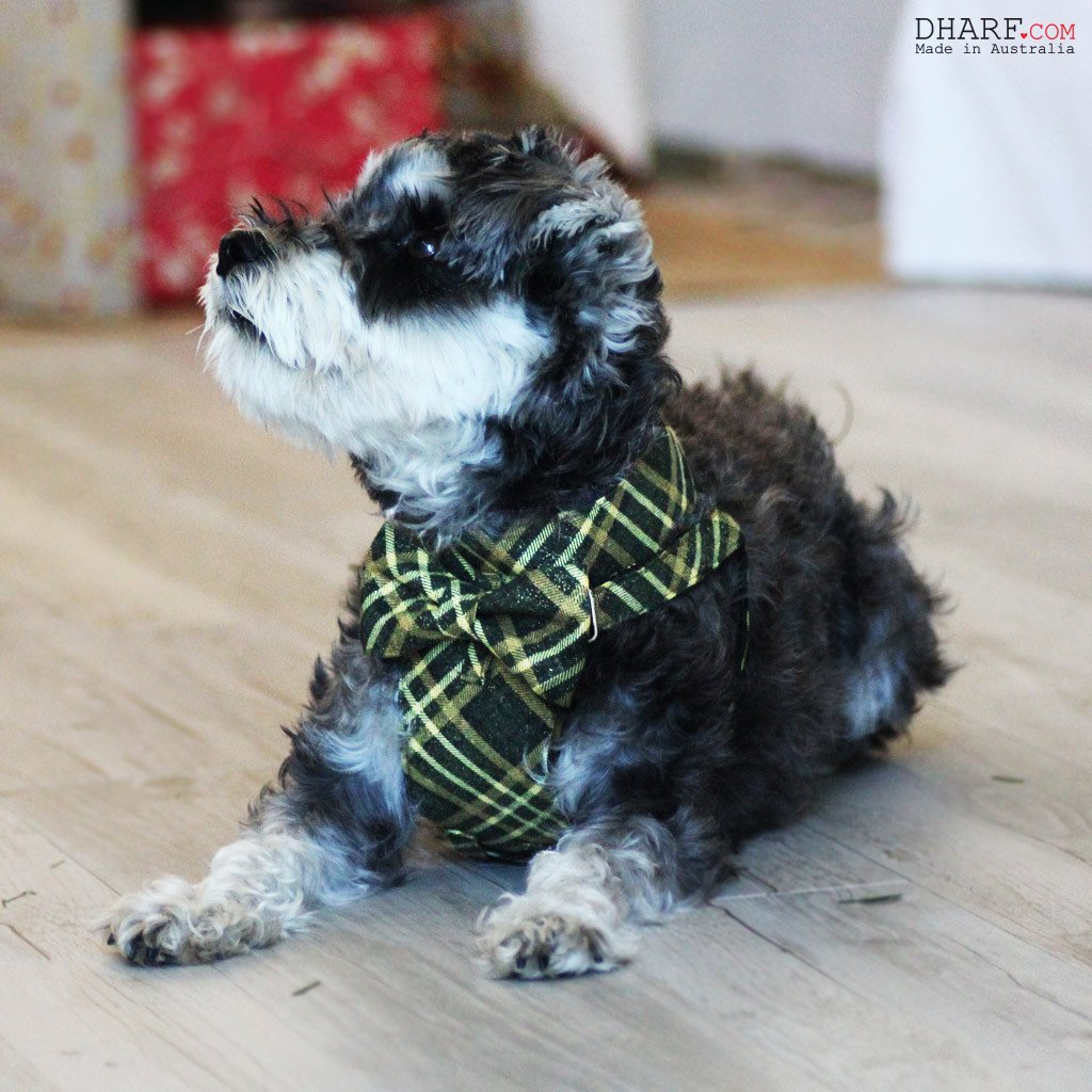 Dog Bow-tie Harness - Green and Gold Tartan