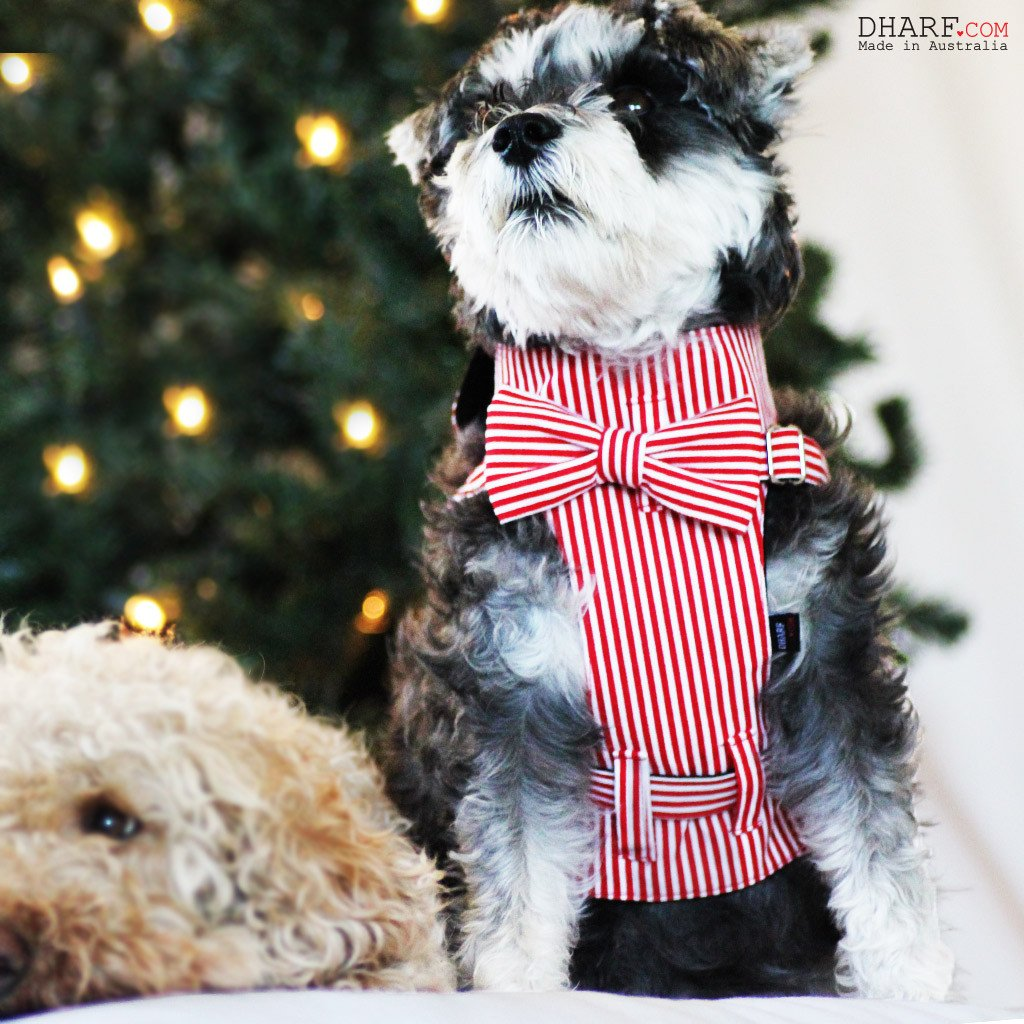 Dog Bow-tie Harness & Leash : Red & White Stripes - Dharf - 3