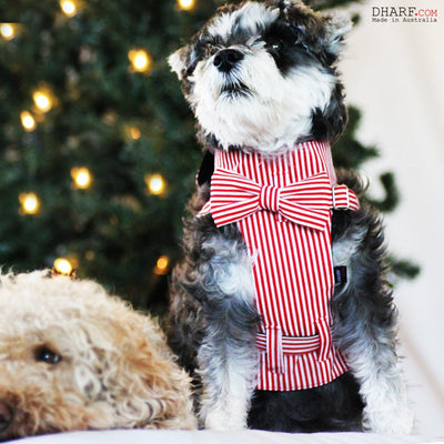 Dharf matching dog bow tie and harness in red and white stripes