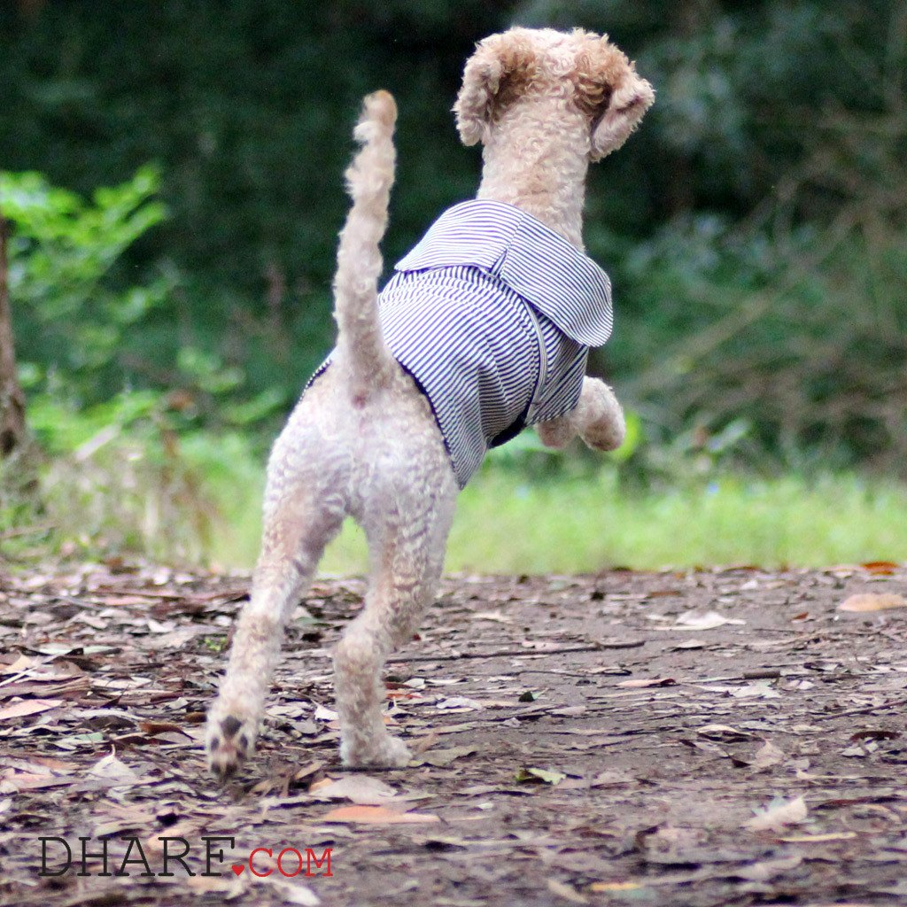 Dog Jacket : Black stripes - Dharf - 4