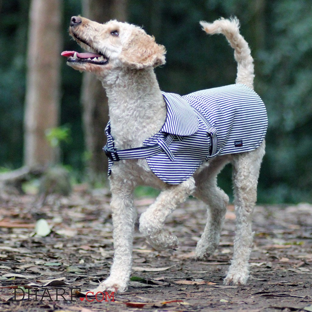 Dog Jacket : Black stripes - Dharf - 3