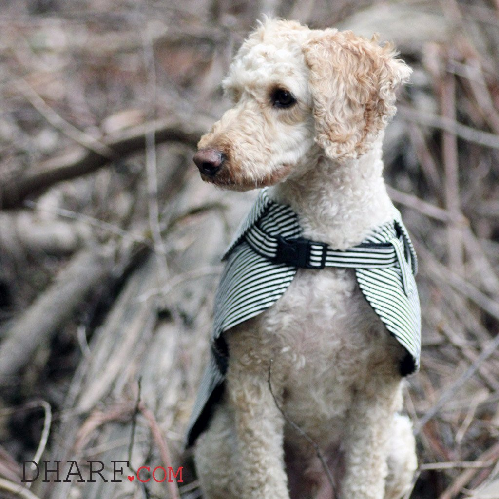 Dog Jacket : Black stripes - Dharf - 2