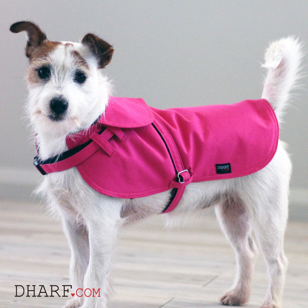 Dog Jacket Water-repellent and Lead Set : Hot Pink - Dharf - 2