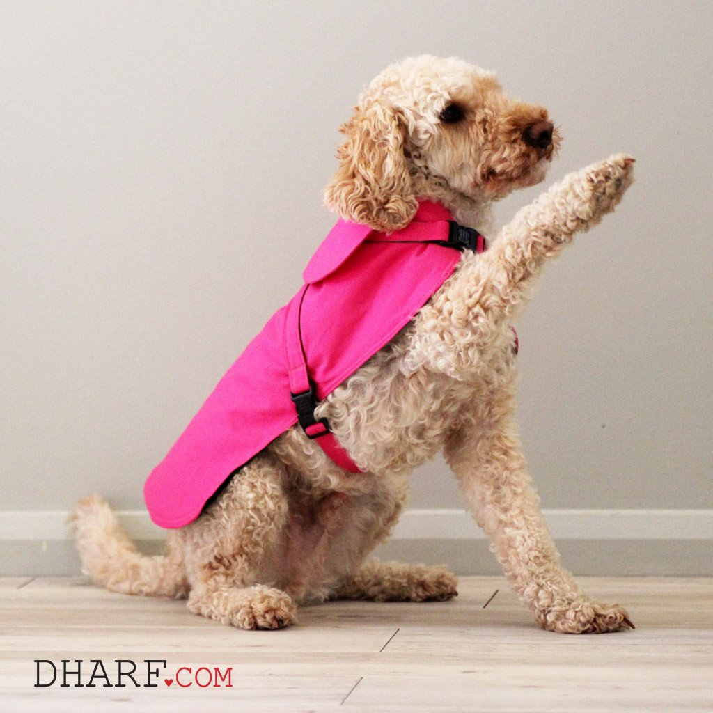 Dharf dog 2 in 1 harness and waterproof jacket in bright pink