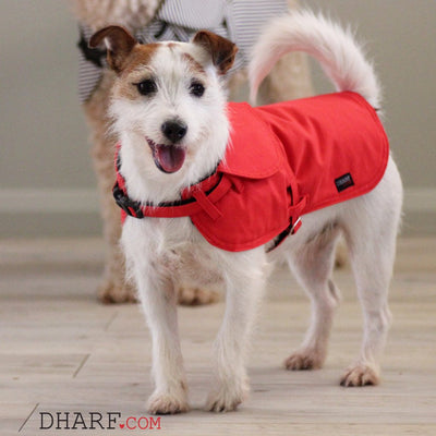 Dharf water repellent dog jacket in red