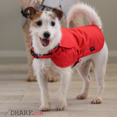 Dharf adjustable 2 in 1 dog jacket and harness in waterproof red