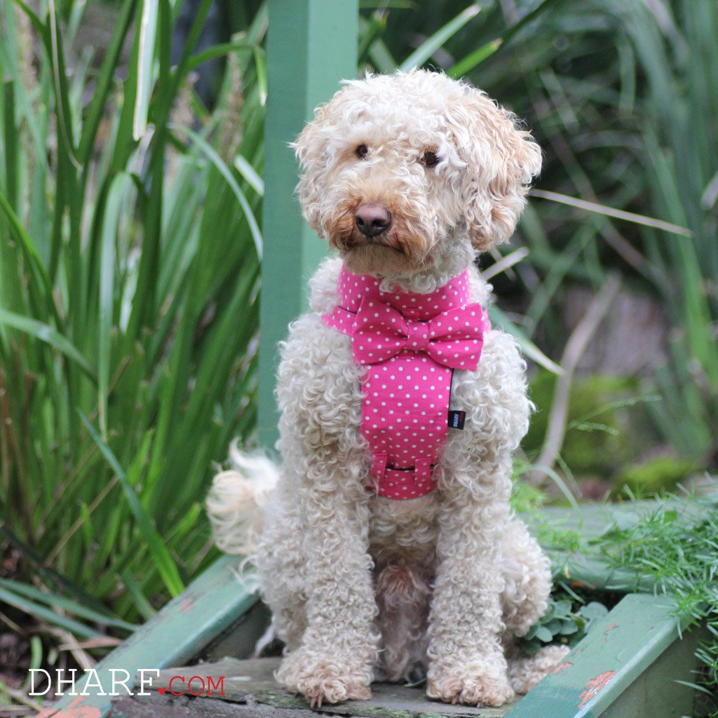 Dog Bow-tie Harness - Pink Polka - Dharf - 2
