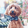 NEW Dog Bow Tie and Collar Set: Classic Plaids Black