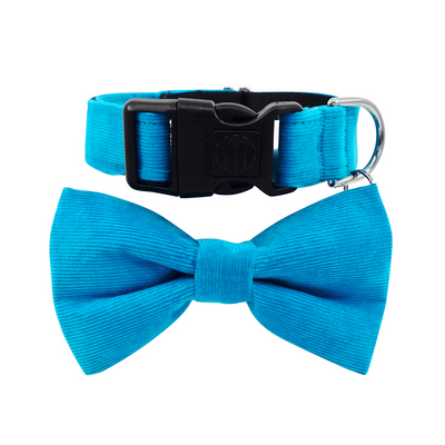 NEW Dog Bow Tie and Collar Set : Corduroy Peacock