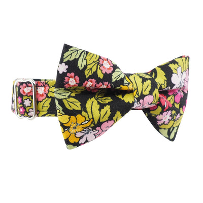 Dog Bow Tie and Collar Set : Rose & Hubble