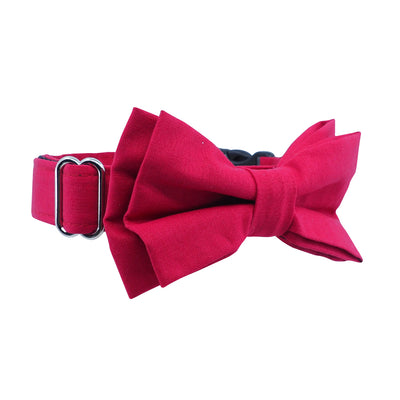 Dog Bow Tie and Collar Set : Shiraz