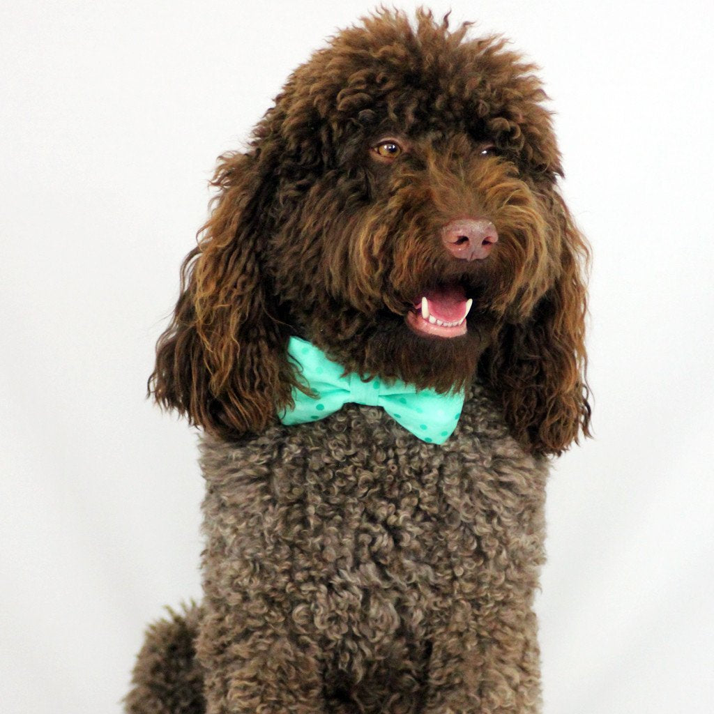 Dog Bow Tie and Collar Set : Spotty Mint Green
