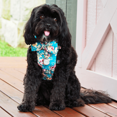 NEW Dog Bow Tie Harness - Summer Blossom In Turquoise