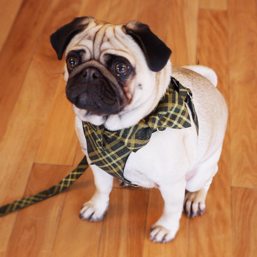 Dog Bow-tie Harness - Green and Gold Tartan - Dharf - 2
