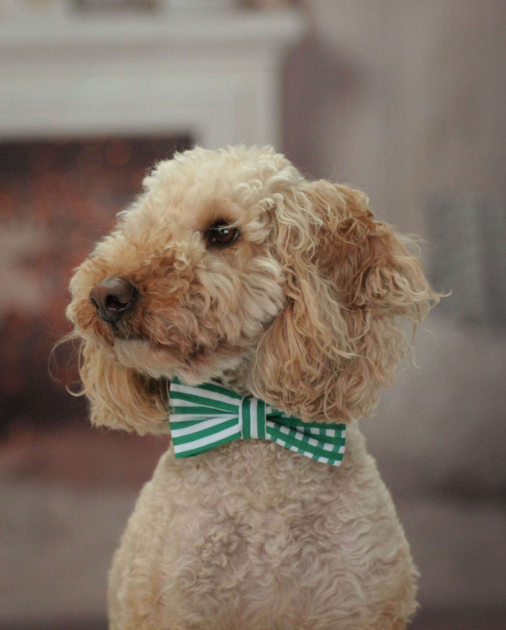 Dog Bow Tie and Collar Set : Green Mix and Match - Dharf - 2
