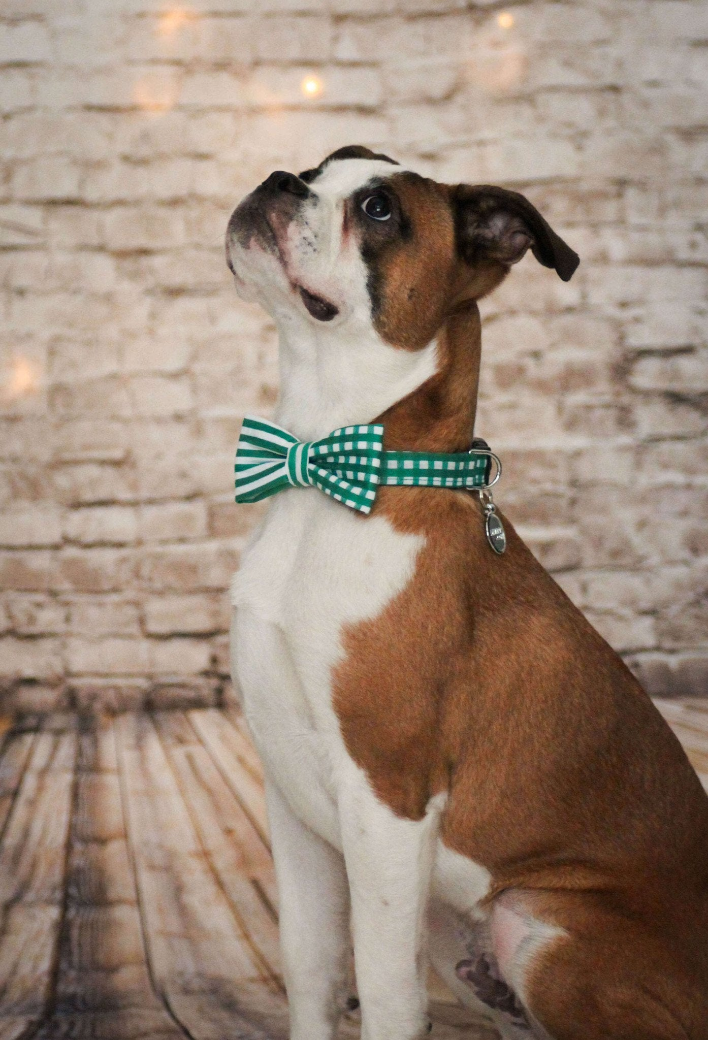 Dog Bow Tie and Collar Set : Green Mix and Match - Dharf - 3