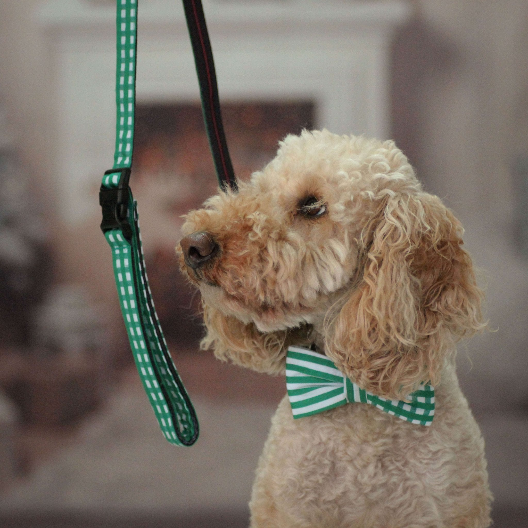 Dog Collar, Bow tie and Leash Set : Green Mix and Match - Dharf - 2