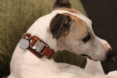 Leather Dog Collar: Whisky Brown