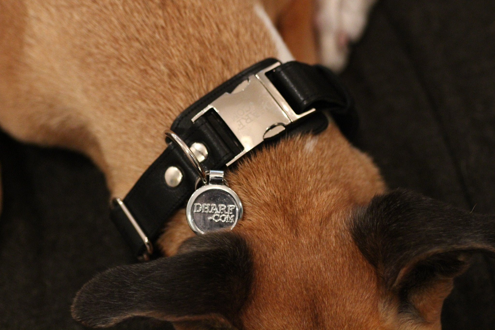 Leather Dog Collar: Black - Dharf - 3