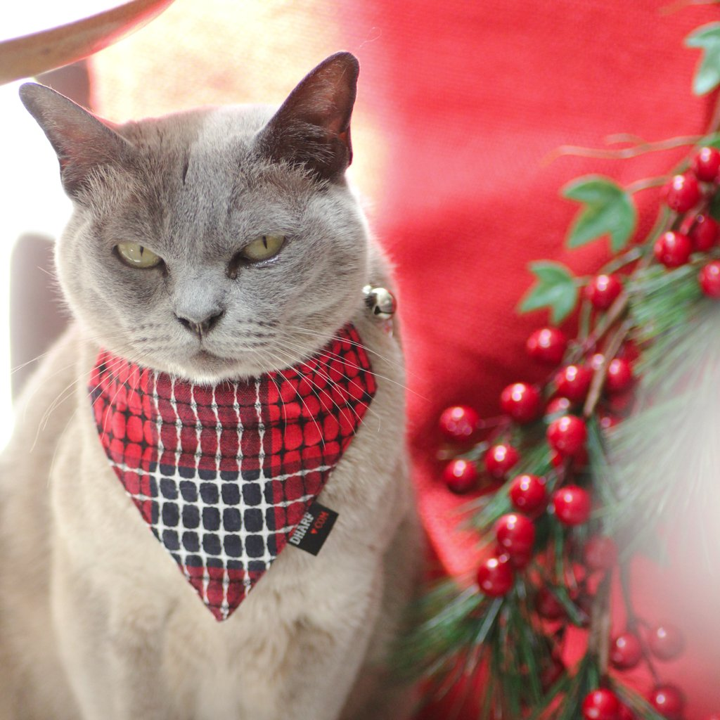 Christmas Cat Bandana and Collar with cross stitch detailing. Red, white and blue colours.  Orders leading up to Christmas 2017 come with free snowflake ID tag while supplies last.