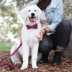 Bardot Dog Bow Tie Collar