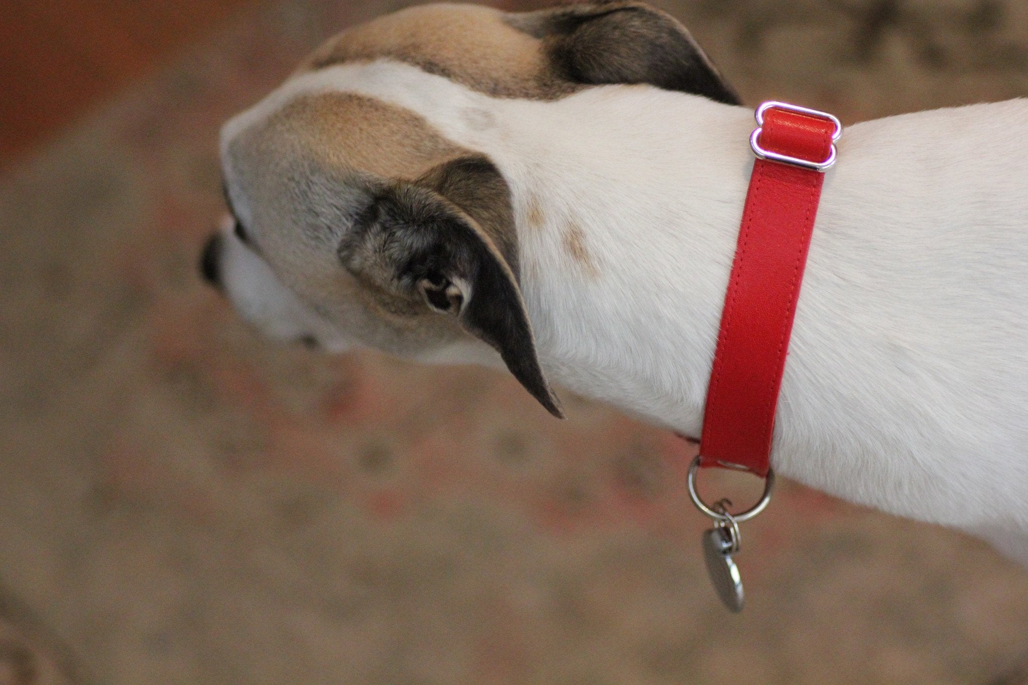 Leather Dog Collar: Red - Dharf - 2
