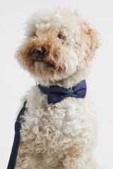 Dog Collar, Bow tie and Leash Set : Jean