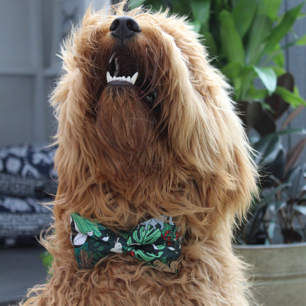 NEW Dog Bow Tie and Collar Set : Jungle Fever