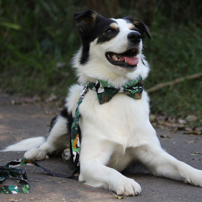 Dog Bow Tie and Collar Set : Jungle Fever