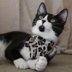NEW Cat Bandana and Collar :  Leopard