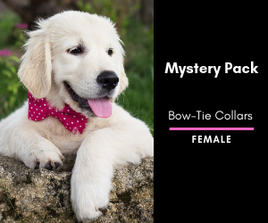 Mystery Bow-Tie Collar 2 Pack: Female