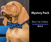 Mystery Bow-Tie Collar 2 Pack: Male