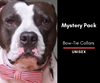 Mystery Bow-Tie Collar 2 Pack: Unisex
