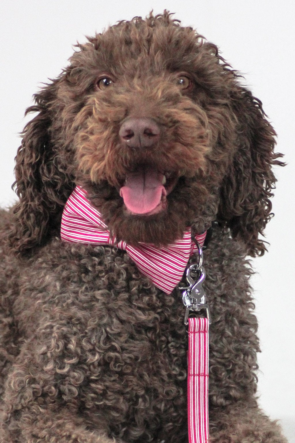 Dharf dog bow tie and leash set in red pinstripe