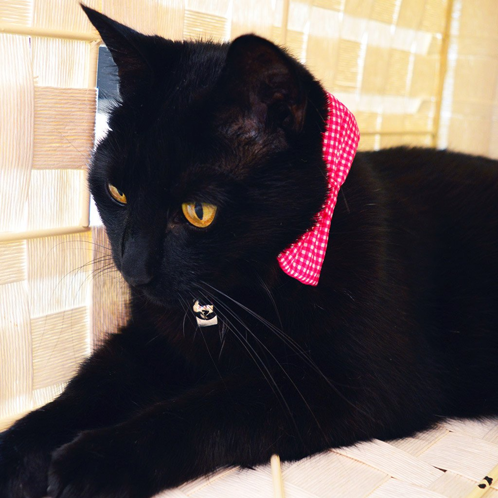 Cat Collar and Bow Tie : Pink Gingham - Dharf - 2
