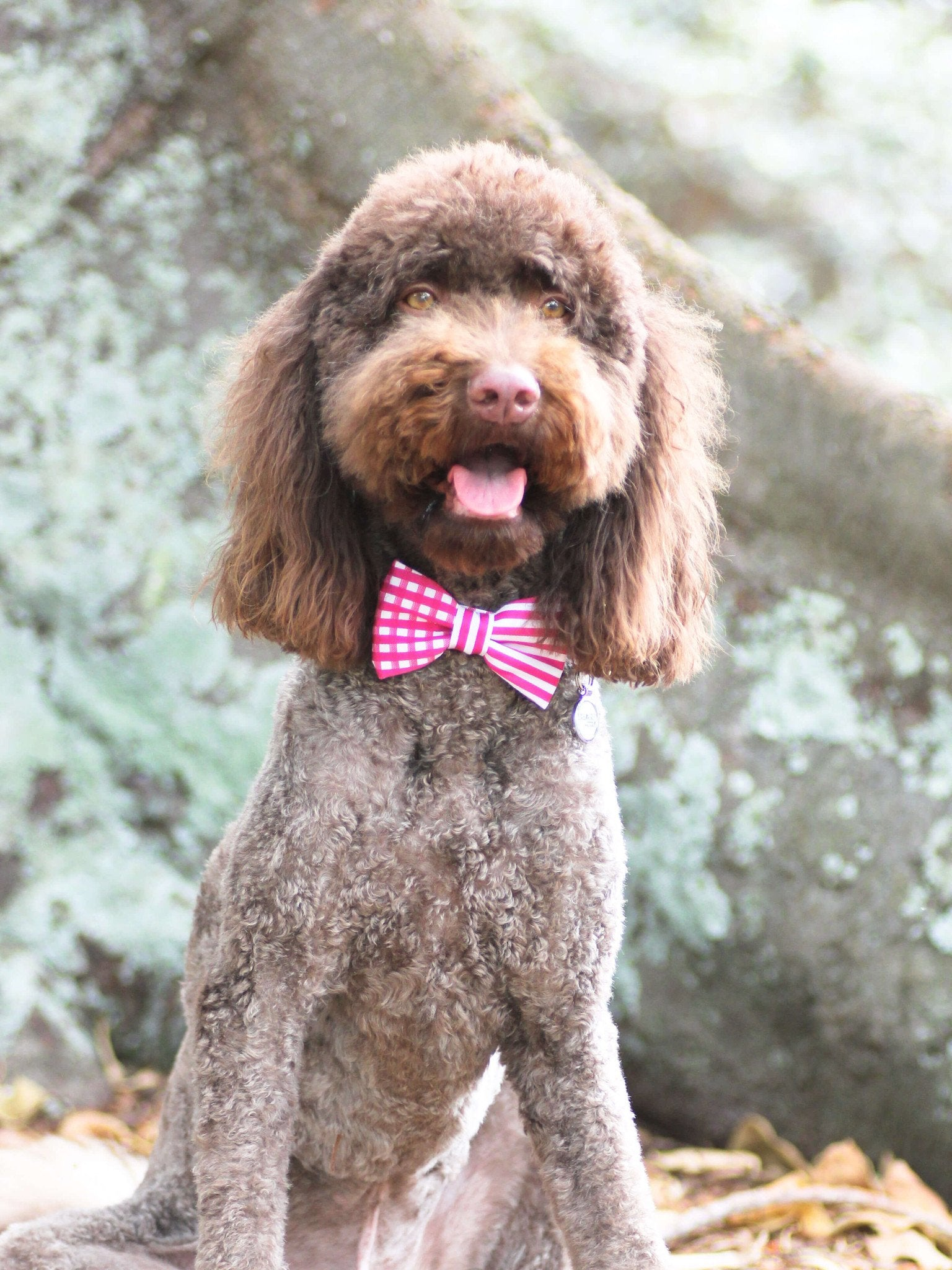 Dog Bow Tie and Collar Set : Pink Mix and Match - Dharf - 5