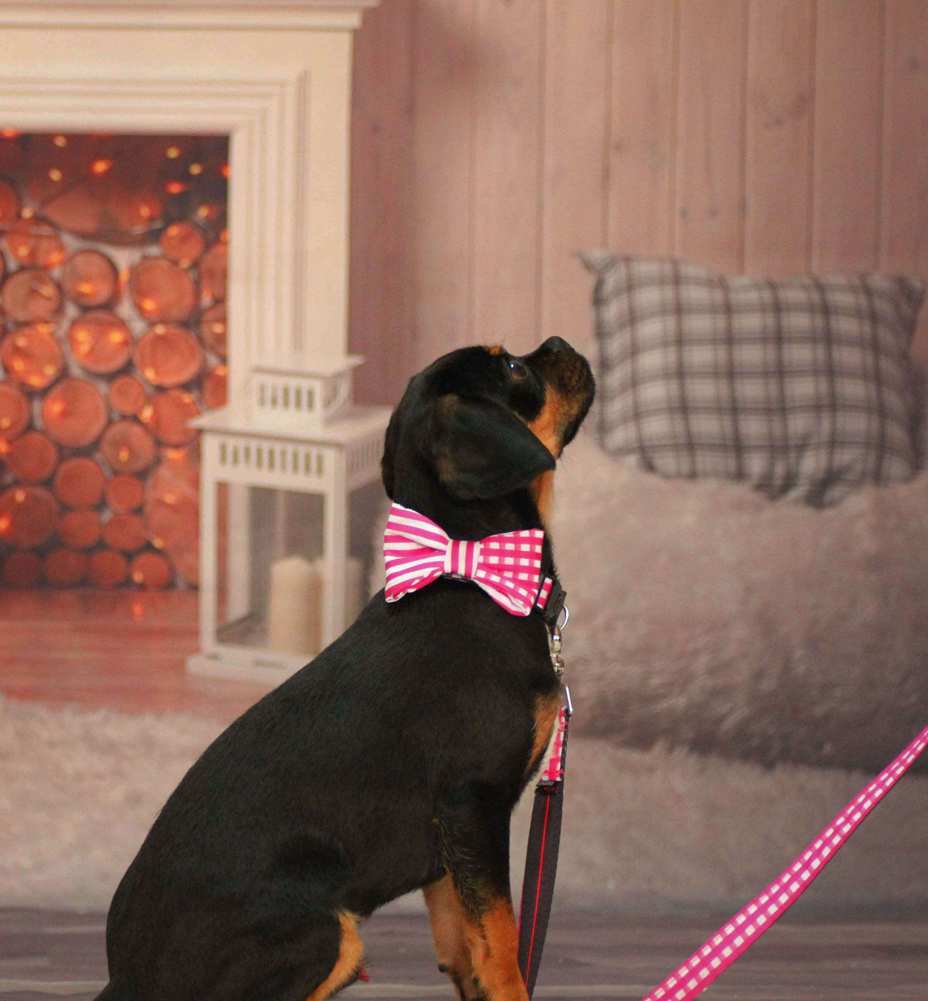 Dog Collar, Bow tie and Leash Set : Pink Mix and Match - Dharf - 2