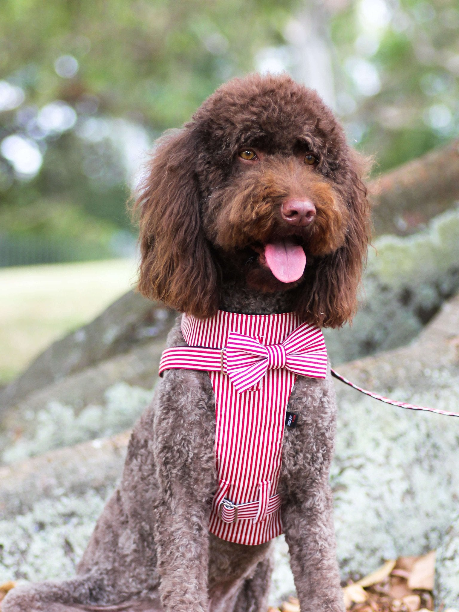 Dog Bow-tie Harness - Red & White Stripes