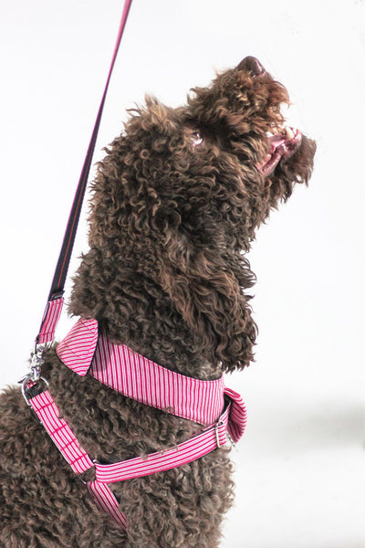 Dharf adjustable dog harness and matching leash in red pinstripe