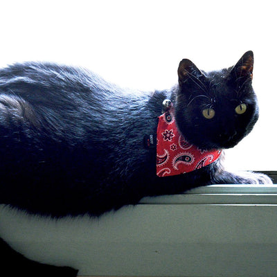 Dharf cat collar and removable bandana in red paisley