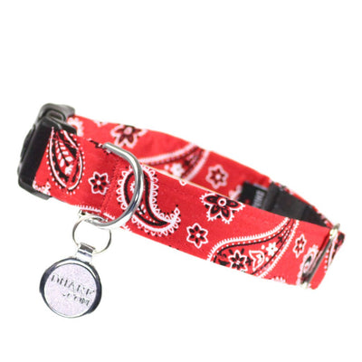 red paisley dog paisley