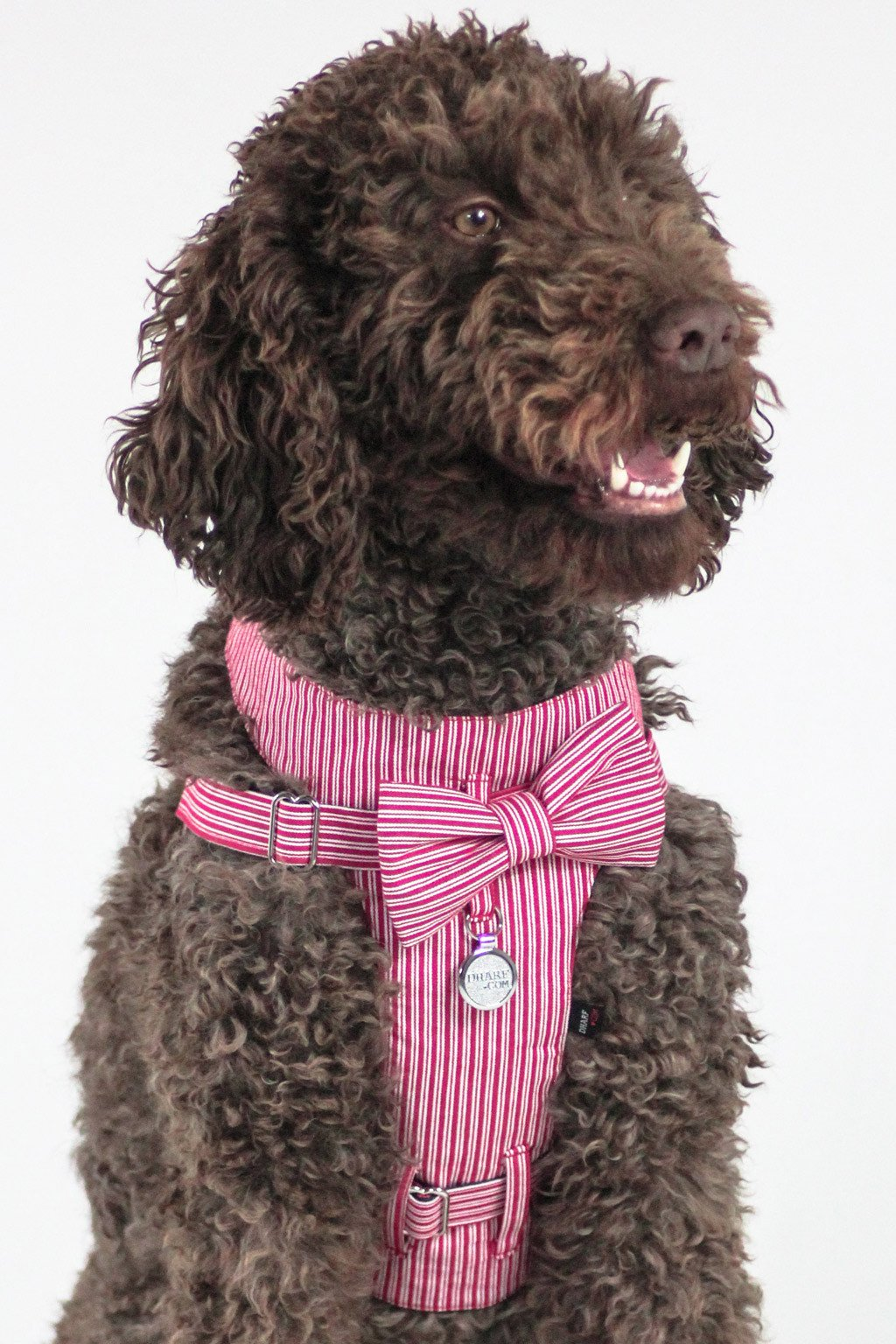 Dharf red pinstripe dog harness