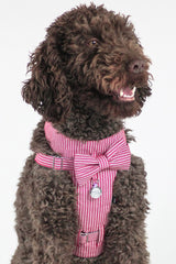 Dog Bow-tie Harness - Red Pin Stripe
