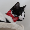 NEW Cat Collar and Bow Tie :  Red Polka Dot