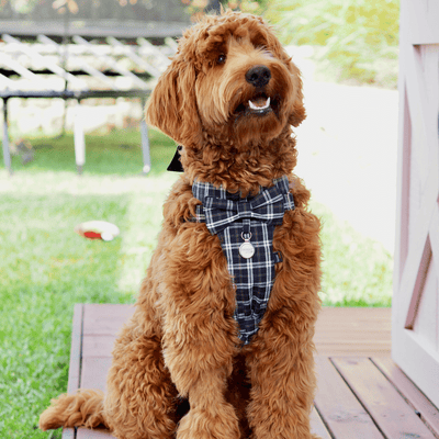 NEW Dog Bow Tie Harness - Classic Plaids Navy