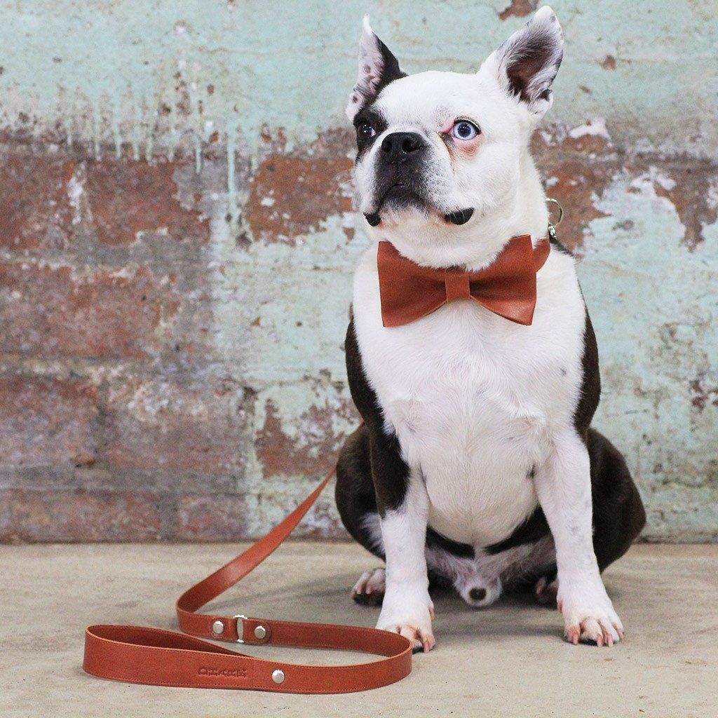 Leather Dog Collar, Bow tie and Leash Set: Whisky Brown - Dharf - 2