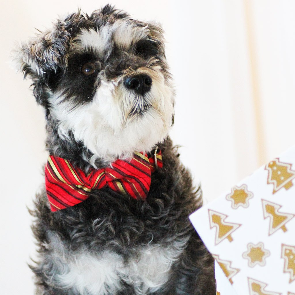 Dog Bow Tie and Collar Set : Red and Gold Candy Cane - Dharf - 2