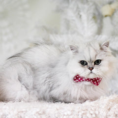 Cat Collar and Bow Tie : Fuchsia Polka